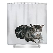 Study Of Cat Shower Curtain