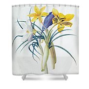 Study Of Four Species Of Crocus Shower Curtain