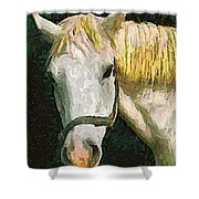Study Of The Horse's Head Shower Curtain