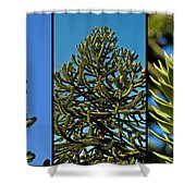 Study Of The Monkey Puzzle Tree Shower Curtain