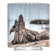 Stump Dragon Shower Curtain