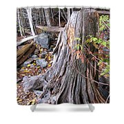 Stump Shower Curtain