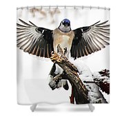 Stumped  Bluejay Shower Curtain
