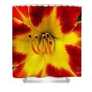 Stunning Daylily  Shower Curtain