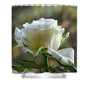 Stunning Rose Shower Curtain