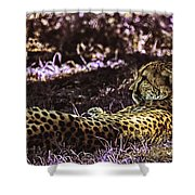 Styled Environment-the Modern Trendy Cheetah Shower Curtain