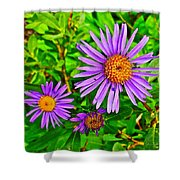 Subalpine Daisy By Vidae Falls In Crater Lake National Park-oregon  Shower Curtain