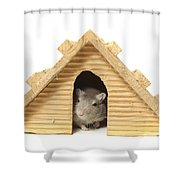 Successful Mouse Shower Curtain