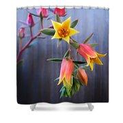 Succulent 23 Shower Curtain