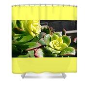 Succulent Bloom Shower Curtain