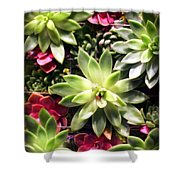 Succulent Beauties Shower Curtain