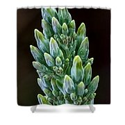 Succulent Bloom Shower Curtain