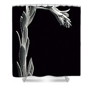 Succulent In Black And White Shower Curtain
