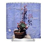 Succulent Blue Shower Curtain