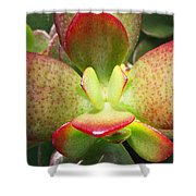 Succulent Plant Upclose Shower Curtain