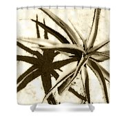 Succulent Under The Scorching Desert Sun Shower Curtain