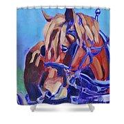 Suffolk Punch Draft Horse Plow Match Shower Curtain