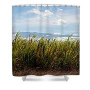 Sugar Cane Field - Maui Shower Curtain