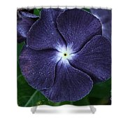 Sugar Coated Periwinkle Shower Curtain