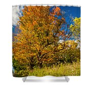 Sugar Maple 3 Shower Curtain