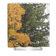 Sugar Maple And Evergreen Shower Curtain