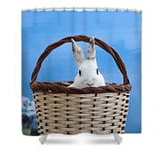 sugar the easter bunny 4 - A curious and cute white rabbit in a hand basket  Shower Curtain