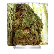 Sugarloaf Burl Shower Curtain