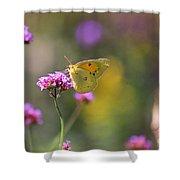 Sulphur Butterfly On Verbena Flower Shower Curtain