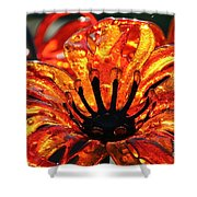 Sultry Petals Shower Curtain