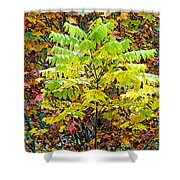 Sumac Leaves In The Fall Shower Curtain