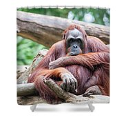 Sumatran Orang Utan Shower Curtain