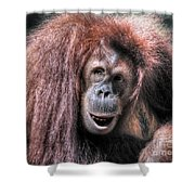 Sumatran Orangutan Shower Curtain