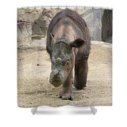 Sumatran Rhinoceros  Shower Curtain
