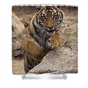Sumatran Tiger Cub Jumping Onto Rock Shower Curtain