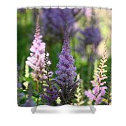 Summer Astilbe Shower Curtain