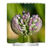 Summer Awakening Shower Curtain