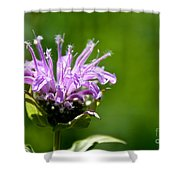 Summer Balm Shower Curtain