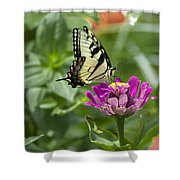 Summer Butterfly Shower Curtain