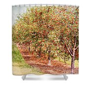 Summer Cherries Shower Curtain