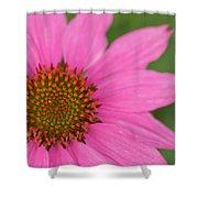 Summer Coneflower Shower Curtain