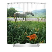 Summer Day Memories With The Paso Fino Stallion Shower Curtain by Patricia Keller