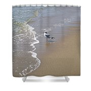 Summer Day Of A Gull 2 Shower Curtain