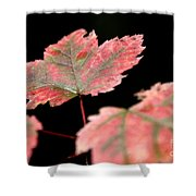 Summer Fall Shower Curtain