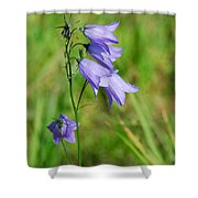 Summer Flowering Harebell Shower Curtain