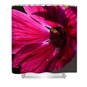 Summer Impressions Shower Curtain