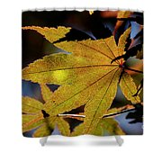 Summer Japanese Maple - 1 Shower Curtain