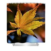Summer Japanese Maple - 2 Shower Curtain