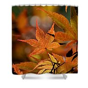 Summer Japanese Maple - 3 Shower Curtain