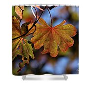 Summer Japanese Maple - 4 Shower Curtain