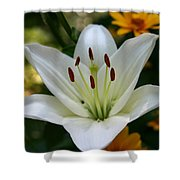 Summer Lily Shower Curtain